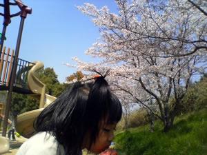公渕公園で花見の写真